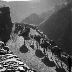 Powindah Migration through the Khyber Pass 1960