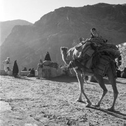 Powindha Migration Khyber Pass 1960